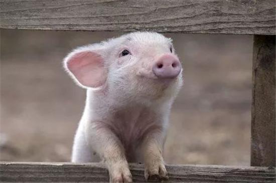 上市猪企扩张势头不减,看看养猪这盘棋