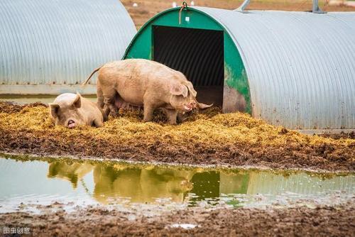 温岭建设台州最大规模养猪场:新希望现代化生猪生态养殖项目开工