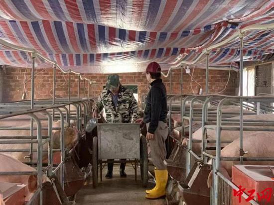 江西省劳动模范罗雪梅:任尔东西南北风,咬定养猪不放松