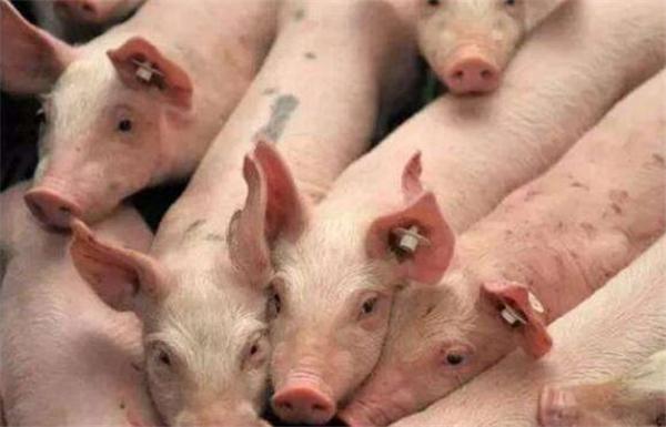 湖南常德:去年生猪存栏290.67万头,出栏384.79万头