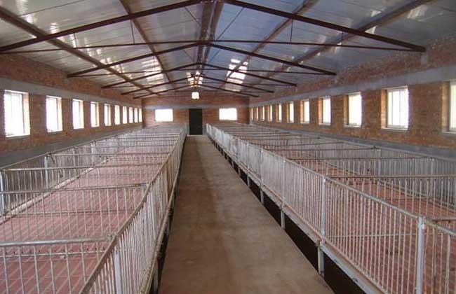 农村办猪场,如何科学建设好?听听专业人士怎么说!