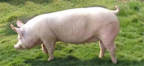 举报养猪场非法采煤 湘乡一群众获奖3万元