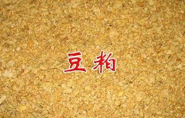 """""""疯狂的豆粕""""!一周上涨323元/吨,豆粕价格还要涨?"""