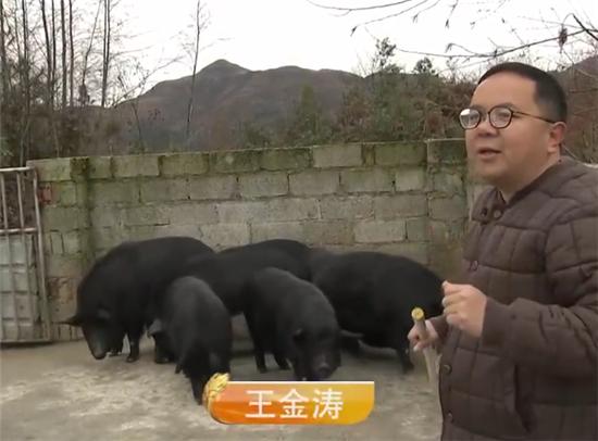 年薪60万白领回乡养猪!猪场存栏破万,其中母猪3500头!