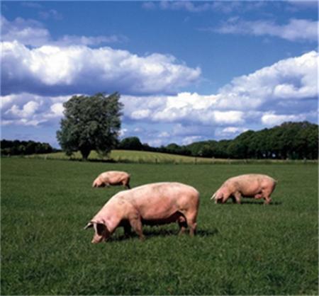 规模化养猪场选址的关键性因素
