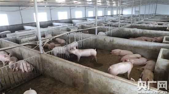 贵州省生猪生产持续恢复 市场供应有序