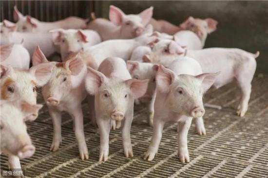 如何将母猪产仔数由8头提高到12头,专家指出4点差距,值得反思!