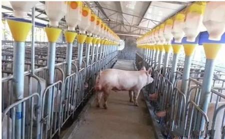 规模化猪场健康养殖技术