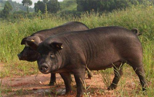 新建养猪场申请环评的完整操作程序!