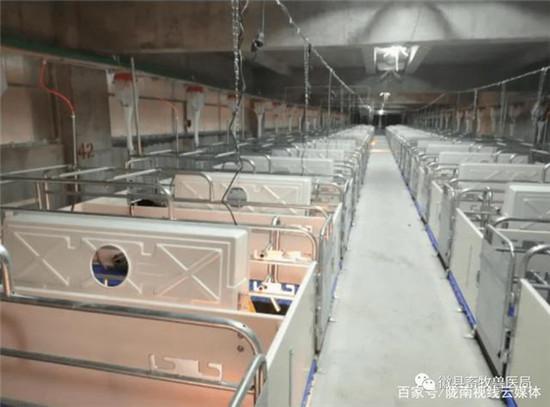 陇南徽县兴疆牧歌养殖有限公司10万头生猪养殖项目顺利引种投产