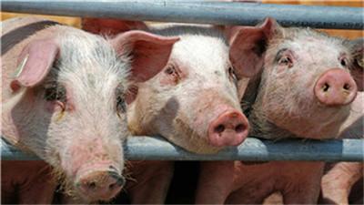 """草木灰被称为""""万能灰"""",在养猪中有何妙用?老兽医传授5个用法"""