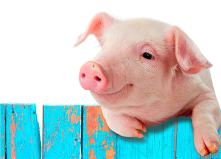 储备冻猪肉投放市场,猪价出现坍塌式下跌!