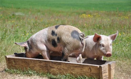 武汉:政府储备冻猪肉已入市 价格低于市面鲜肉售价