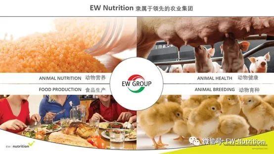 重磅:EW Nutrition收购Novus(诺伟司)饲料质量和色素业务