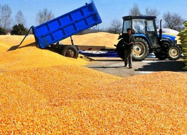 玉米价格暴涨之势骤停,年后行情如何?