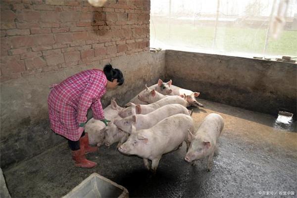 美国猪肉出口中国,价格4.35元每斤,为何进入国内却卖40元每斤?