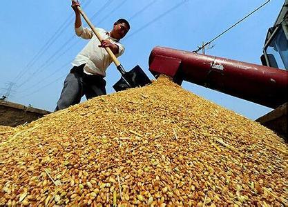 豆粕价格依然高位运行,短期出现小幅震荡