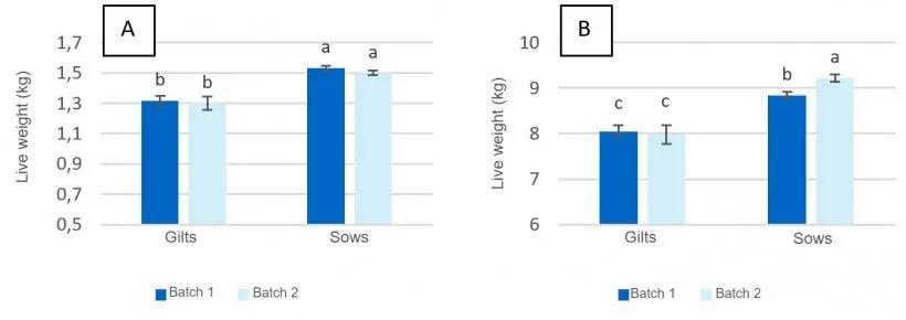 母猪分娩前采食量对断奶仔猪生产性能的影响