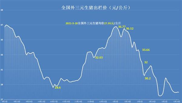 """猪价掉头走跌,北方跌成""""重灾区"""",3月猪价跌绿到底?预测来了"""