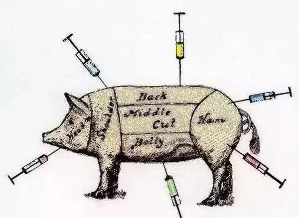 技术:猪打针正确位置,你可能一直都错了!