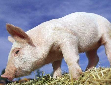 上市公司猪场选址的八大要点