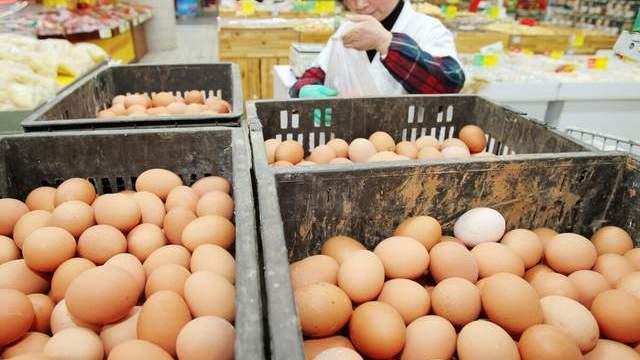 """鸡蛋""""凉""""了,猪价""""热""""了,玉米定向拍卖又来了,是利是弊?"""