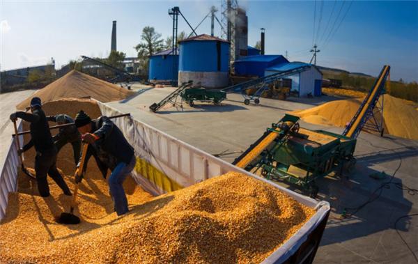 """市场观察:玉米、生猪、鸡蛋走势大变盘!新的""""降价潮""""会来吗?"""