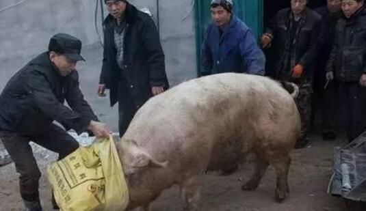 抓到这样的猪贩子你千万别让他跑了,丧良心啊!