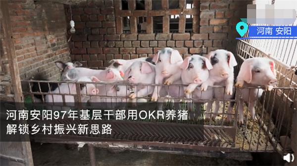 河南安阳97年基层干部用OKR养猪!网友:这猪看起来都眉清目秀的
