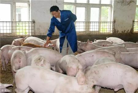 育肥猪饲养管理方法