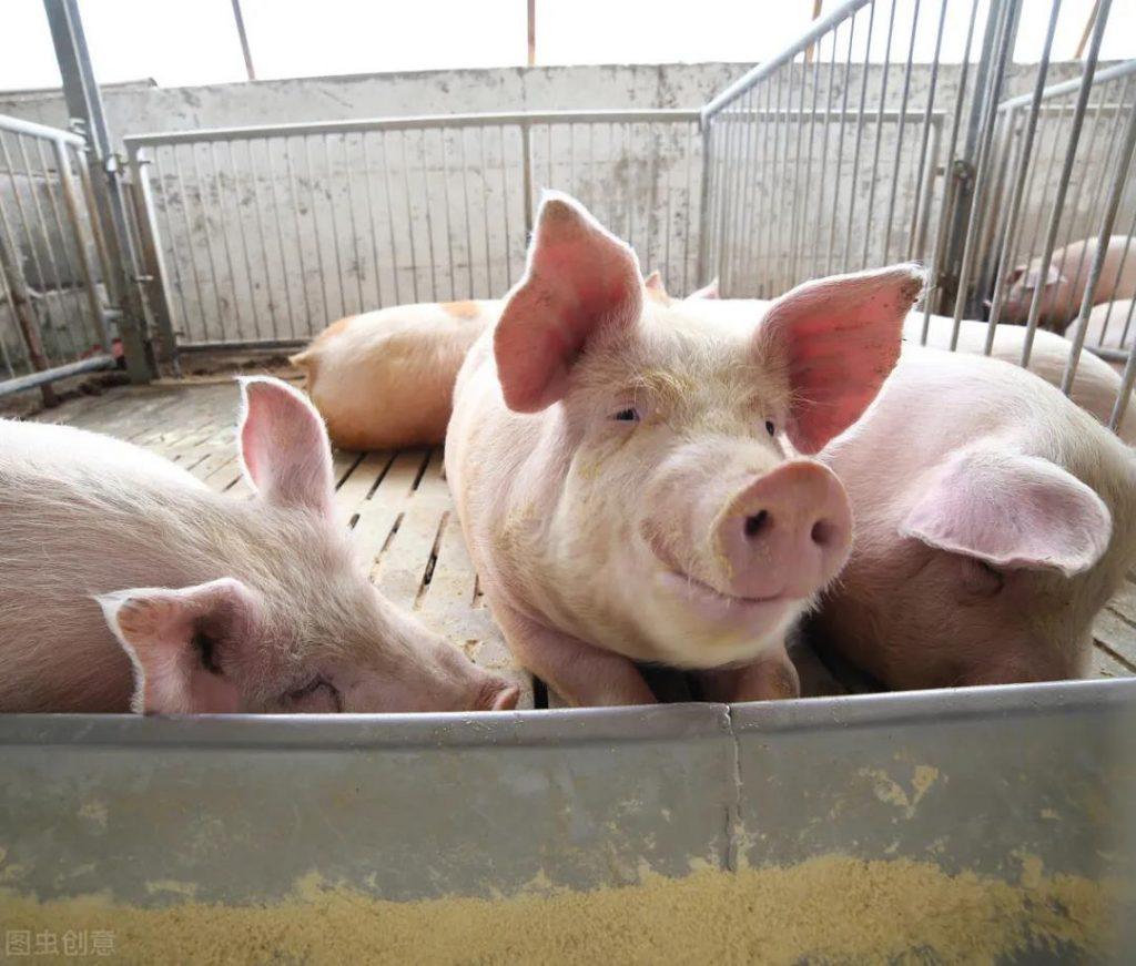 什么是营养代谢障碍?猪营养代谢障碍如何防治?