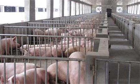 """养猪场""""常见猪病用药的五组秘方""""治疗程序介绍"""