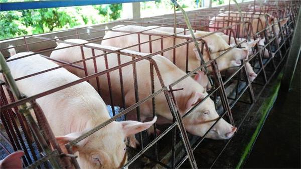 猪价8连跌后,又一农产品现年后最大跌幅,今年农民干啥更赚钱?