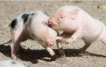 造成断奶仔猪经常性腹泻的原因是…!