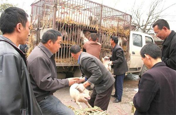 """猪价""""狂涨""""数日,啥时候是个头,便宜猪肉何时才能到来?"""