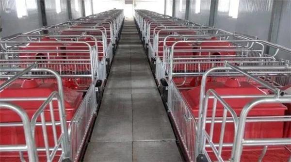 散户养猪一个重要问题建造猪栏;你知道什么样猪栏养猪效益高?
