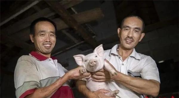"""""""肢残兄弟""""板上钉钉的养猪致富路"""