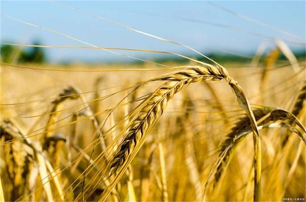 """玉米价格回调:4个""""利空""""因素分析,2方面价格""""支撑"""""""