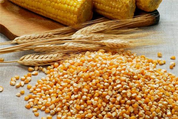 猪价13连跌,玉米跌到1.3元,3个利好消息在路上,要涨?