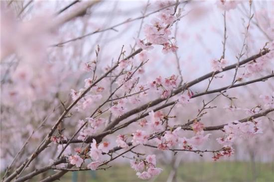 """""""田园赏味,小镇生活""""——一场与""""猪""""有关的春日盛宴"""