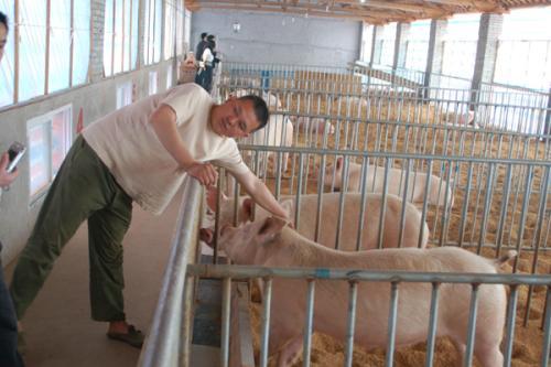 二十年养猪经验的行家建议:养猪必须简单化!