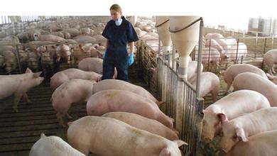 中国暂停进口下 英国有3/4猪肉商亏损!24国猪肉还加速来华