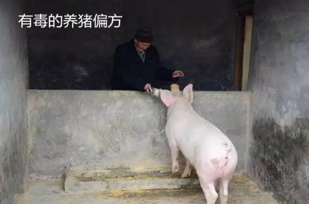 """有""""毒""""的养猪偏方,你还在用吗?"""