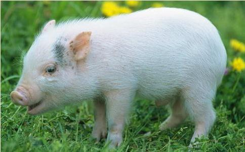 030中国生猪出栏将达7.13