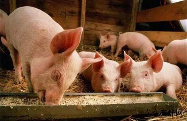 从临床症状上快速判断猪呼吸道疾病!
