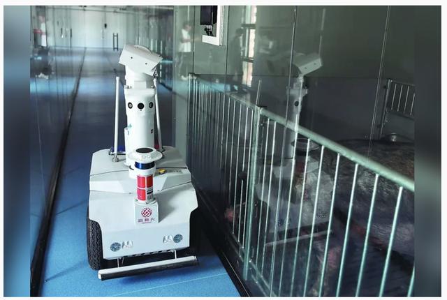 养猪高科技再刷屏!区块链养猪!机器人巡检!
