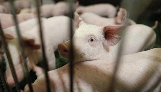 猪价跌跌不休,行业头均盈利创两年新低