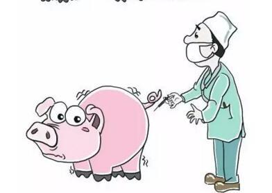不要轻易给猪打退烧针!反而要了猪命!