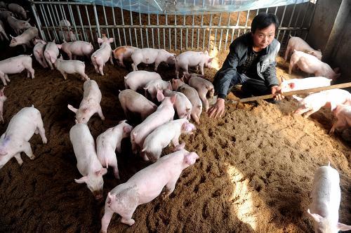 老场长关于三种猪病治疗经验总结