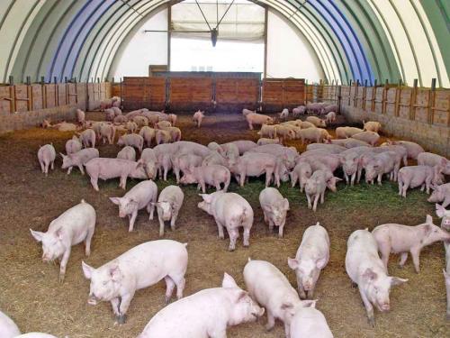五种颜色五种猪病,这些猪病应该这样防治